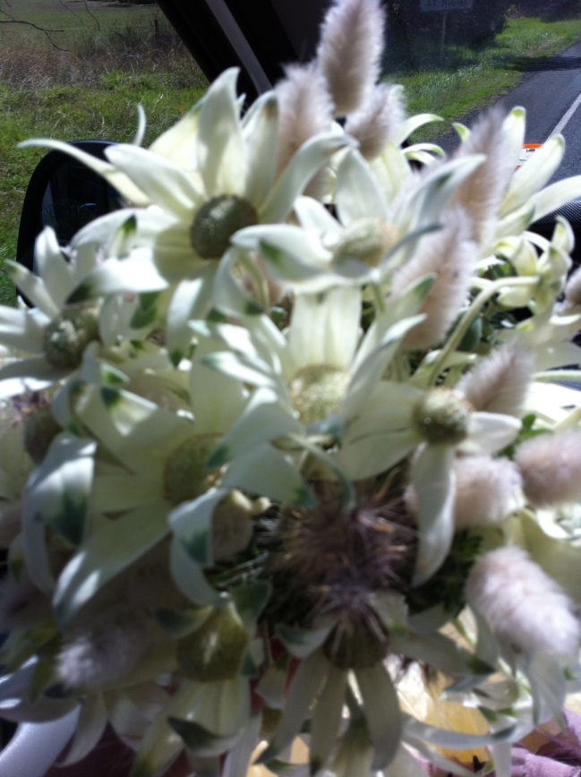 Flannel flower and bunny tails, dream combo